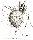 Rysunek tuszem - Echinocystis lobata<br/>autor: Monika Bilewicz